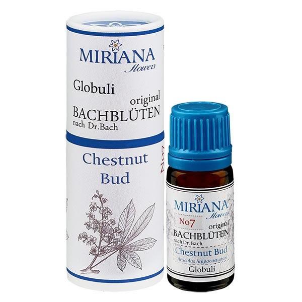 Chestnut Bud Bachblüten Globuli (Knospe der Roßkastanie) 10g