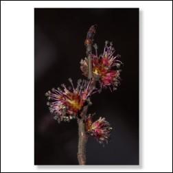 Elm Bachblütenfoto - Bild 30x45cm