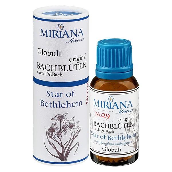 Star of Bethlehem Bachblüten Globuli (Doldiger Milchstern) 20g