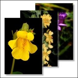 Bachblüten Bilder-Set 30x45cm