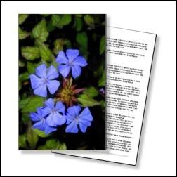 Cerato Bachblüten Karte 10x15cm
